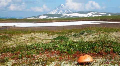 cambio climático provoca que plantas tundra broten 20 días antes que hace dos décadas