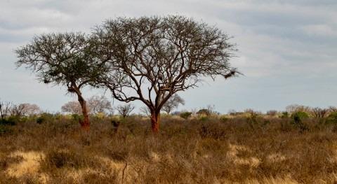 kenianos piden no esperar temporada larga lluvia luchar sequía