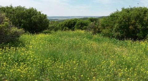 ¿Podría acelerarse desertificación debido al aumento contaminación nitrógeno?