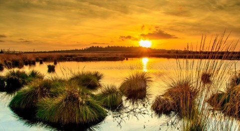 Todo lo que necesitas saber Día Mundial Agua 2018: respuesta está naturaleza