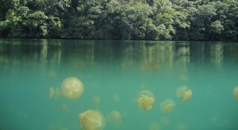"""lago medusas: experiencia """"gelatinosa"""""""
