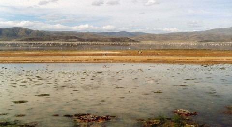 mujeres urus Bolivia asimilan mejor altos niveles arsénico presentes aguas