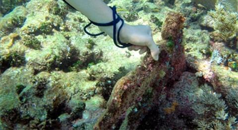 Rumbo recuperación cuerpos agua y arrecifes Caribe