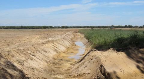 WWF denuncia que agricultura ilegal sigue avanzando Doñana