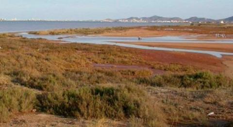 Mar Menor: Preocupante falta oxígeno aguas