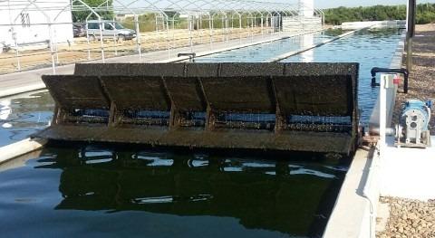 Lagunaje 2.0: cosechando microalgasdepurando aguas residuales (y II)