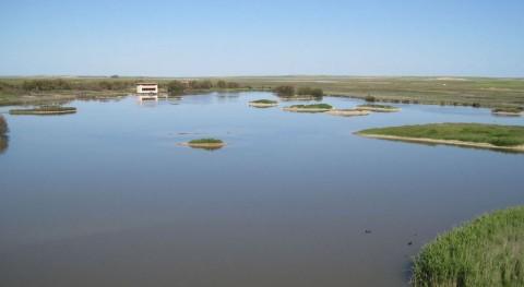 Lagunas Villafáfila: ejemplo ecosistema gran valor ambiental