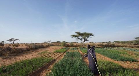 pesticidas pueden acelerar propagación patógenos mortales transmitidos agua
