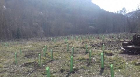 URA planta árboles y arbustos riberas ríos Álava durante primer trimestre 2019