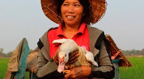 ¿Cómo crear resiliencia frente al cambio climático Laos?