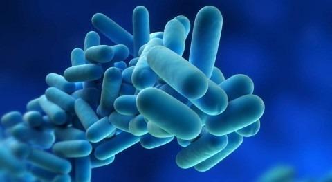 Legionella (Prevención y Actuación)