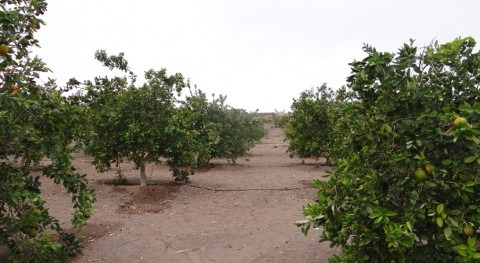 Chile licita estudio que busca mejorar gestión riego Valle Pica