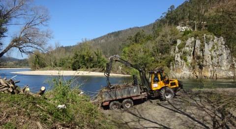 CHC realiza trabajos limpieza cauces Nalón paso Pravia