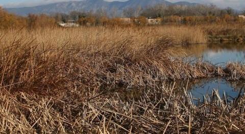 Vista invernal del sistema de humedales construidos de Empuriabrava, con la EDAR al fondo.
