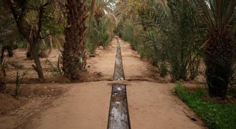 Acequia de riego en una plantación del desierto