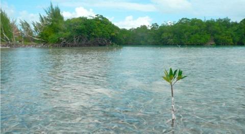Volver manglares: humedales y cambio climático