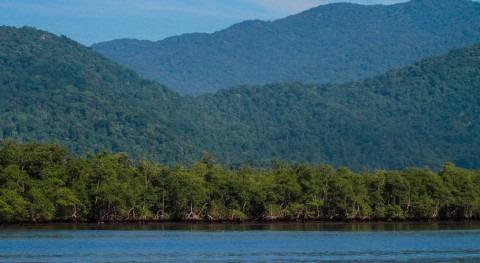 Tribunal Supremo Brasil pone salvo provisionalmente manglares tropicales