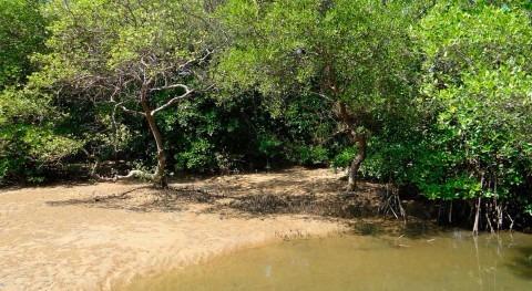 Sundarbans: Alerta roja manglares