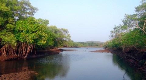 ¿Qué variables ambientales influyen secuestro carbono manglares mundo?