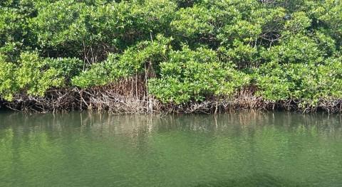manglares actúan como reservorio carbono azul