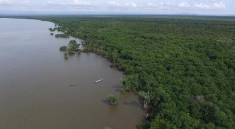 manglares Colombia, despensa carbono azul