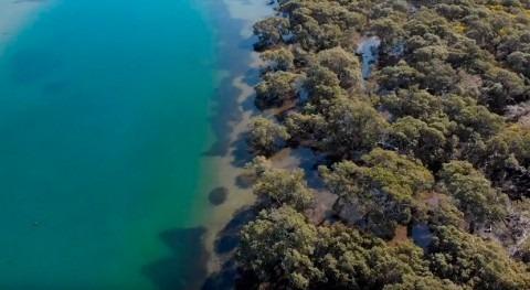 manglares podrían ser súper solución cambio climático