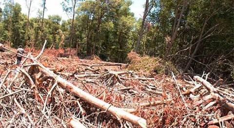 Modificar o devastar manglares hace vulnerable población