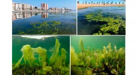 Atajar entrada sedimentos y nutrientes, primer paso recuperación Mar Menor