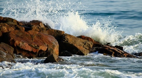 ecosistemas marinos muestran resistencia perturbaciones climáticas