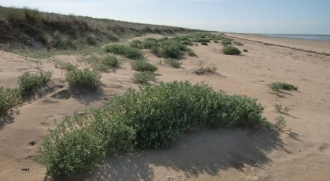 Francia designa zona costera gran tamaño como Humedal Importancia Internacional