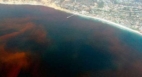Investigadores mexicanos estudian presencia marea roja