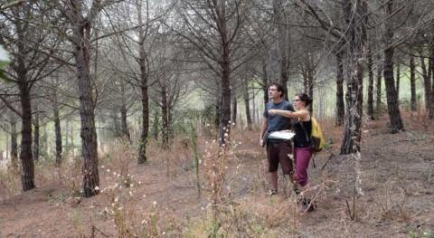 árboles madera poco densa y hojas delgadas mueren sed antes