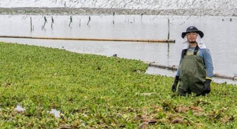 recuperación humedal Cascajo, Perú: caso éxito pro-ambiental