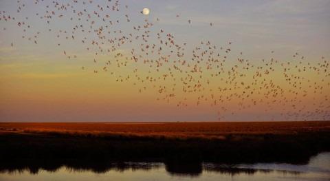UNESCO retrasa año plazo presentación informes estado Doñana