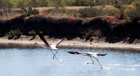 Paraje Natural Marismas Odiel, laboratorio estudio paliar cambio climático