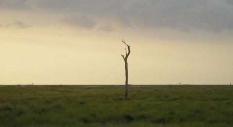 Doñana, riesgo entrar lista negra Unesco, Ecologistas