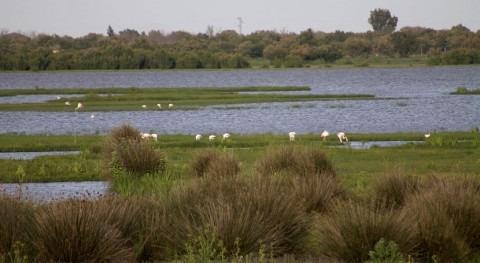Halladas fuentes contaminación nitratos aguas superficiales vertientes Doñana