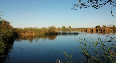 Gobierno designa humedal Marjal Almenara, Valencia, como sitio Ramsar