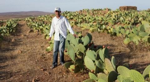 Marruecos, ejemplo crecimiento que hace frente al cambio climático