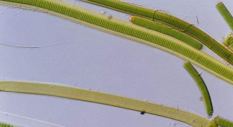PURALGA: depuración sostenible residuos agroindustriales microalgas y bacterias