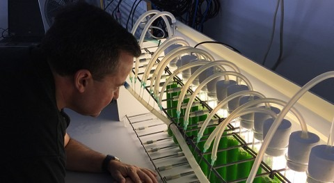 Investigadores UAL emplean microalga cultivada aguas residuales como fertilizante