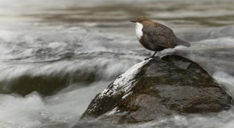 SEOBirdLife celebra que Comisión Europea se posicione favor Directiva Marco Agua