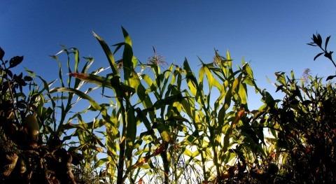América Latina será clave seguridad alimentaria global