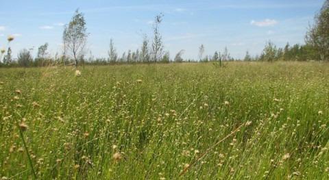 Bielorrusia amplía sitio Ramsar Morochno