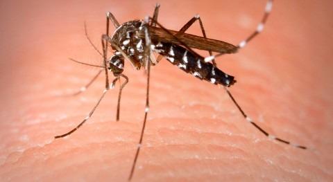 Alerta mosquito tigre imbornales sifónicos