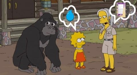 ¿Qué tiene que ver tu móvil gorilas, agua, o derechos humanos?