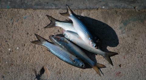 Aparecen más 1.300 kilos peces muertos charca Rambla Morales Almería