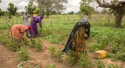prácticas agrícolas resilientes desastres podrían beneficiar pequeños agricultores