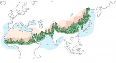 FAO anuncia nuevo plan apoyo soluciones al cambio climático basadas naturaleza