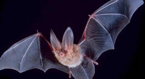 Acuamed organiza charlas divulgación murciélagos Cieza